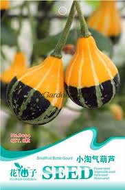 compare prices on ornamental gourd seeds shopping buy low