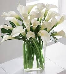calla lilies bouquet palm harbor florist simplicity luxury calla bouquet