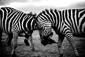 black and white pic beautiful black and white wallpapers 33