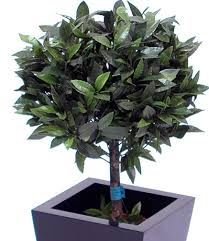 amazing artificial bay trees from the uk s premier supplier