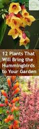 12 plants that will bring the hummingbirds to your garden bless
