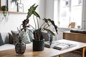plant room 11 houseplants ideas that outsmart winter depression