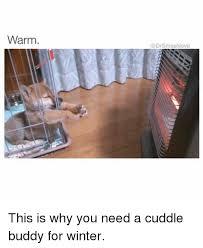 Cuddle Buddy Meme - 25 best memes about cuddle buddies cuddle buddies memes
