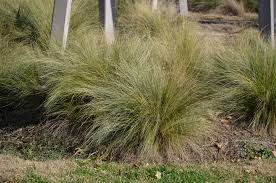 native tennessee plants what grows there hugh conlon horticulturalist professor