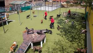k9 university chicago dog daycare and boarding in chicago il