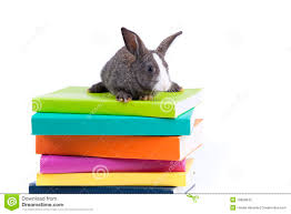 easter bunny books easter bunny reading book stock images 7 photos