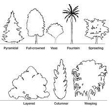 16 best basic tree shape images on canopies shrubs