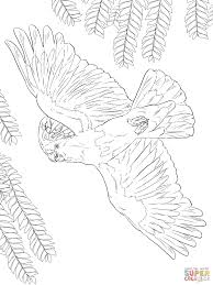 major mitchell u0027s or pink cockatoo coloring page free printable