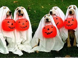 Puppy Halloween Costumes Bad Pet Costumes Animal Cruelty