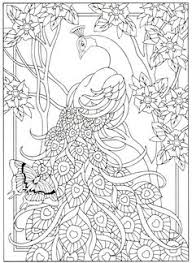 peacock coloring page for adults 6 31 coloring pages peacocks
