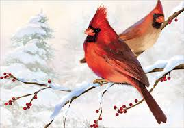 two cardinals box of 18 cards by designer greetings