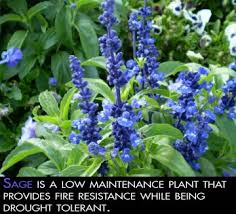 fire safe landscaping ready for wildfire