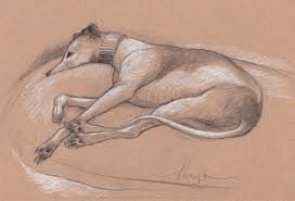 tracie thompson artist thanksgiving greyhound sketches from