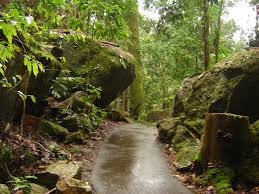 native plants in the tropical rainforest queensland tropical rain forests wikipedia