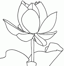 printable coloring pages lotus flowers coloring home
