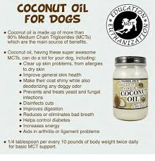 Coconut Oil Meme - coconut oil wcatt for dogs ot coconut oil is made up of more than 90