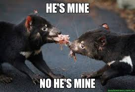 Mine Meme - he s mine no he s mine tasmanian devil aussie memes