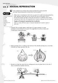 how do organisms reproduce lessons tes teach