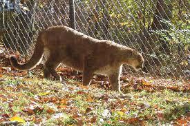 West Virginia wildlife images Visiting the west virginia state wildlife center rural ramblings jpg