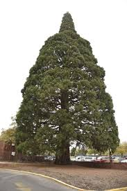 sequoia st luke s prepares for historic move boise