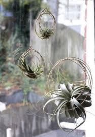 hanging air plant small tillandsia ornaments air plant ornaments air plant hangers