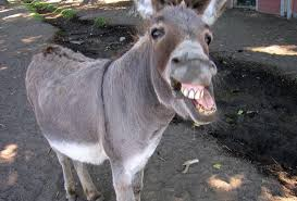 funny donkey blank template imgflip