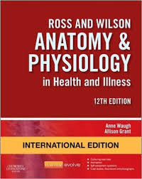 Anatomy And Physiology Pdf Free Download Textbook Of Anatomy Upper Limb And Thorax Volume 1 2e Paperback