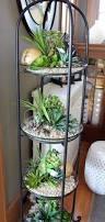 indoor succulents love it jardins miniatures pinterest
