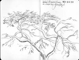 image gallery of japanese maple tree drawing