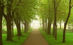 thick trees path grass sun wallpapers thick trees path grass sun