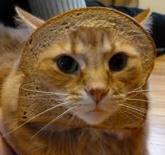 Cat Breading Meme - meme watch cat breading is the best thing since sliced bread
