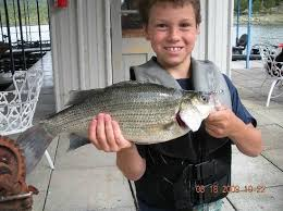 Table Rock Lake Fishing Guides by Big Ol U0027 White Bass From Table Rock Picture Of Focused Fishing