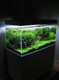 Aquascaping Techniques 494 Best Aquascaping Images On Pinterest Aquarium Ideas
