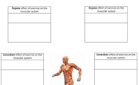 gcse pe aqa new 2016 muscular u0026 skeletal system by jpridmore