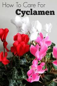 7424 best winter gardening tips images on pinterest gardening
