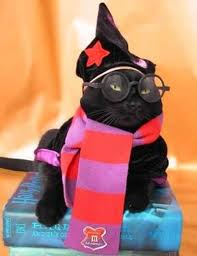 Pug Halloween Costumes Sale 28 Halloween Costumes Cats Put Smile Face