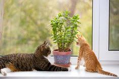 poisonous plants for cats don u0027t let your cat eat these toxic