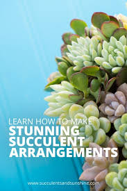 succulent arrangements learn how to create amazing succulent arrangements succulents