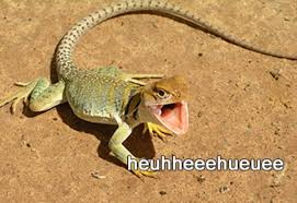 Lizard Meme - laughing lizard hhhehehe know your meme
