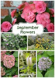 Wedding Flowers For September Good Flowers For A September Wedding Moved Permanently Paige S
