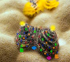 christmas presents on a coral reef madang ples bilong mi