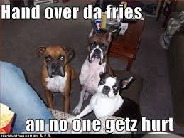 boxer dog sayings 214 best boxers u003c3 images on pinterest boxer love animals and