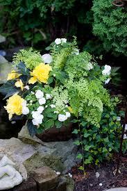 heavenly scent herb farm shade container gardens maidenhair