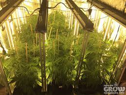 most efficient grow light vertical hydroponic systems