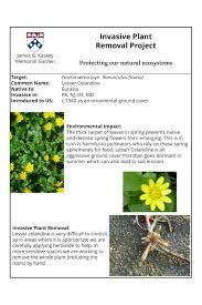 invasive non native plants invasive plants james g kaskey memorial park