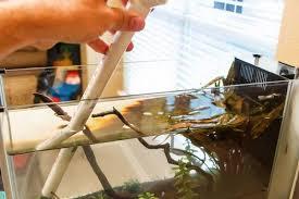 how to clean a betta fish tank bettaboxx