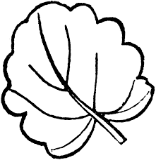 flower leaves clipart leaf shape pencil and in color leaves pin
