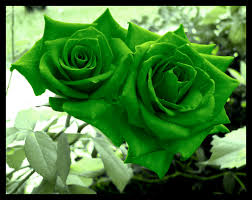 green roses green roses they were initially orange i edited the c flickr