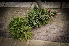 can you reuse a christmas tree u2013 options for disposing of