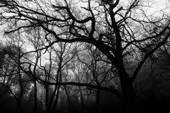 set of black trees illustration 55726056 megapixl
